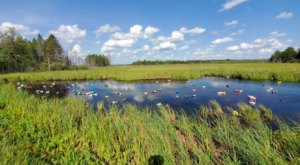 The Ditch Ducks Of Highway 65 In Minnesota Just Might Be The Strangest Tourist Trap Yet