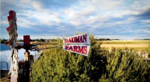 The Bauman's Harvest Festival In Oregon Is A Classic Fall Tradition