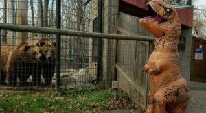 Go Trick-Or-Treating At The Dakota Zoo In North Dakota For A Memorable Family-Friendly Event