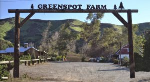 The Little-Known Farm In Southern California, Greenspot Farms, That Turns Into A Pumpkin Paradise This Time Of Year