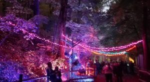 The Whimsical One-Mile IllumiZoo Experience In Michigan Will Take You On A Spectacular Nighttime Adventure