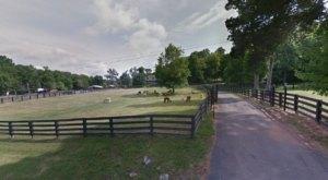 You Can Pet Alpacas When You Visit The Mistletoe Farm Just Outside Of Nashville