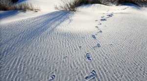 Ancient Human Footprints Were Discovered Among Thousands Of Fossils At White Sands National Park In New Mexico