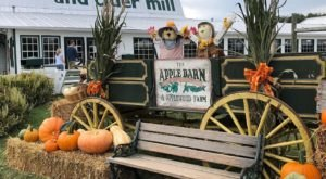 Sink Your Teeth Into The Warm Apple Cider Donuts At The Apple Barn In Tennessee