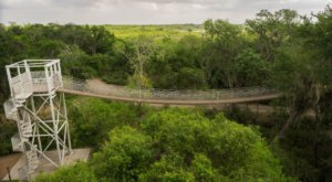 Walk Among The Treetops On A Rope Bridge At Santa Ana National Wildlife Refuge In Texas