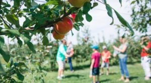 Royal Oak Farm Orchard In Illinois Is A Classic Fall Tradition