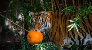 Bring The Whole Family To Zoo Boo, A Kid-Friendly Halloween Event In Texas