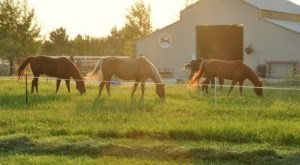 Get A Taste Of The Simple Life With A Stay At The B&B Horse Motel At Sweet Pepper Ranch In Idaho
