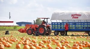 The Pumpkin Patch At Dewberry Farm In Texas Is A Classic Fall Tradition