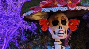 Walk Through A Sea Of Skeletons At The Tucson Botanical Gardens' Day Of The Dead Display In Arizona