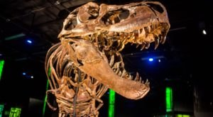 Most People Have Never Heard Of This Fascinating Dinosaur Exhibit At The Arizona Science Center