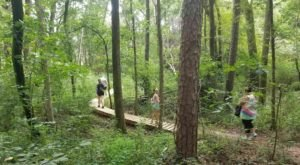 The 1.8-Mile Purser-Hulsey Trail In North Carolina Takes You Through An Enchanted Forest