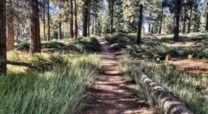 The Hiking Trail Hiding In Southern California, Pine Knot Trail, That Will Transport You To Another World
