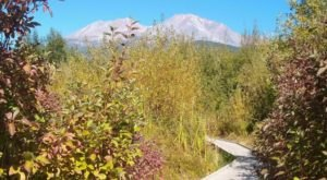 Enjoy Captivating Views Of Mount Shasta With A Stroll Through Sisson Meadow In Northern California