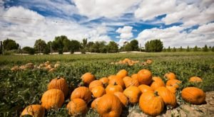 Enjoy 5,000 Acres Of Fall Fun At Schnepf Farms In Arizona