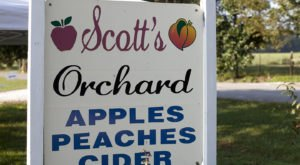 Enjoy Fresh-Pressed Apple Cider This Fall At Scott's Orchard In Alabama