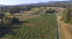 Northern Lights Christmas Tree Farm's Beloved Colonial Harvest Days Has Returned To Oregon