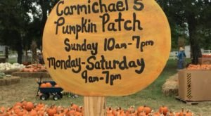 Celebrate Fall With Pumpkins And Wagon Rides At Carmichael's Pumpkin Patch In Oklahoma
