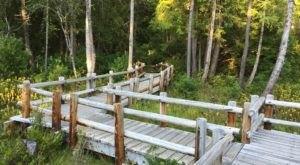 Darlingtonia Wayside Is A Boardwalk Trail In Oregon That Leads To A Secret Botanical Garden
