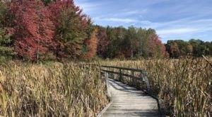 Proud Lake Recreation Area In Michigan Has Endless Boardwalks And You'll Want To Explore Them All