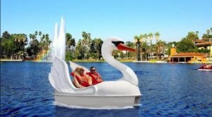 Pedal A Swan Boat Around Echo Lake For A Dreamy Day On The Water In Southern California