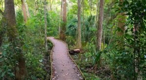 Enjoy 7 Different Hiking Trails When You Visit Jacksonville Arboretum & Gardens In Florida