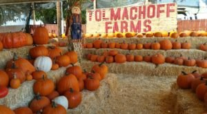 The Pumpkin Days And Corn Maze Festival At Tolmachoff Farms In Arizona Is A Classic Fall Tradition