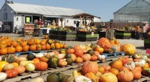 This Underrated Farm In Maryland Is Full Of Family Fun And Pumpkins Galore