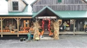 Head To Woodlake Tree Farm In Maryland For Your Autumn, Winter, And Home Decor Needs