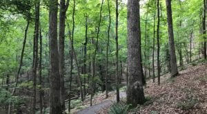 Trail Among The Trees Is One Of The Most Beautiful Hikes In Missouri