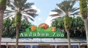 The Audubon Zoo Has Been Voted One Of The Best Zoos In The U.S.