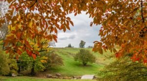 Wander Through 1,000 Acres Of Fall Colors In Bloom At Winterthur In Delaware