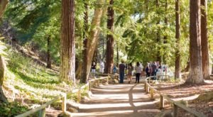 Santa Barbara Botanic Garden Is A Fascinating Spot in Southern California That's Straight Out Of A Fairy Tale