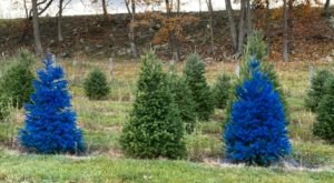 Get Lost In This Beautiful 140-Acre Christmas Tree Farm In West Virginia