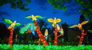 WildLanterns Is The Brand New Display At Woodland Park Zoo In Washington, And It's Illuminating