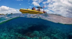 Swim With Sea Life When You Embark On A Snorkel Tour With Hanauma Bay Tours In Hawaii