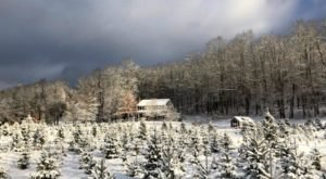 Pick A Fragrant And Fresh Christmas Tree At Maple Hollow Farm In Connecticut