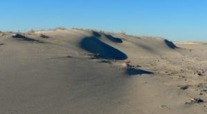 The Rolling Dunes Of Cape Henlopen State Park Are A Delaware Natural Wonder