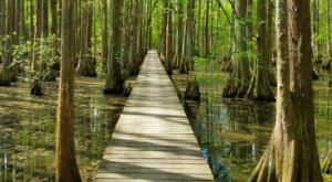 Feel Like You're Walking On Water When You Explore The Lake Chicot Loop Trail In Louisiana