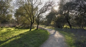 Stretch Your Legs At Effie Yeaw Nature Center, A 100-Acre Preserve In Northern California That's Home To 3 Nature Trails