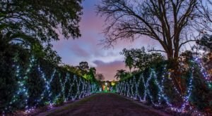 Kick Off The Holidays With A Visit To The Enchanting Celebration In The Oaks In New Orleans