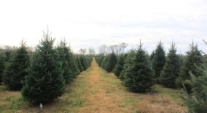 Even The White House Knows That The Best Christmas Trees Are Found At Dan And Bryan Trees In West Virginia