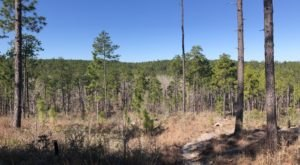 Off The Beaten Path In Kisatchie National Forest, You'll Find A Breathtaking Louisiana Overlook That Lets You See For Miles
