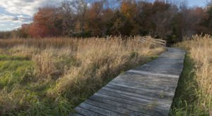 Take A Boardwalk Stroll Alongside Massachusetts Wildlife At Daniel Webster Wildlife Sanctuary