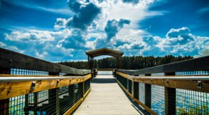 You'll Have A Front Row View of Lake Louisa State Park, Florida  in These Cozy Cabins