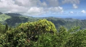 There's A Trail For Everyone In Hawaii's Round Top Forest Reserve