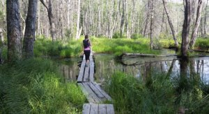 Feel Like You're Walking On Water When You Explore The Quincy Bog Natural Area Boardwalk In New Hampshire