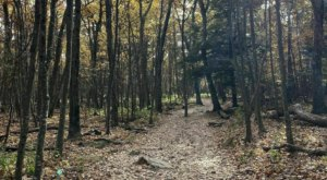 Escape To The Mountains And Hike Stony Man Trail, An Easy Loop In Virginia's Blue Ridge Mountains