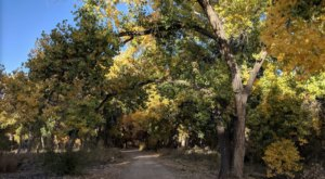 With 2 Short Trails And Observation Areas, Willow Creek Bosque Is A Perfect Hiking Spot In New Mexico