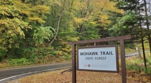 At Nearly 500 Years Old, The Oldest Trees In Massachusetts Can Be Found In Mohawk Trail State Forest
